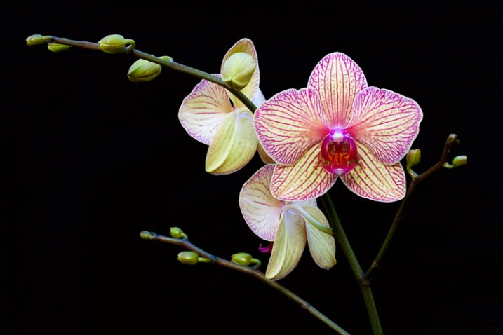 2_orchid_flash