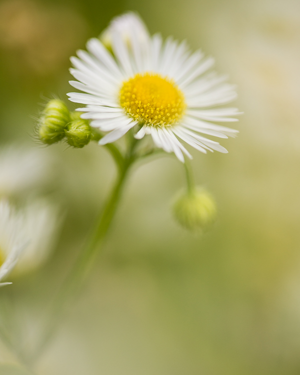 4_shoot_through_petals