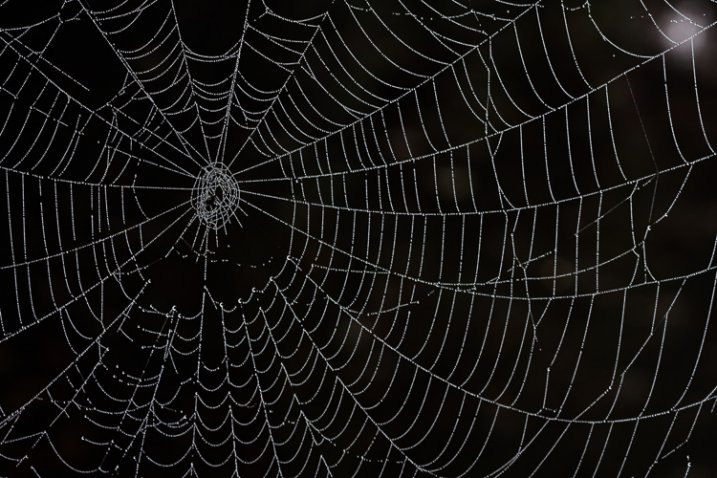 http://digital-photography-school.com/wp-content/uploads/2015/04/5_spiderweb-717x478.jpg
