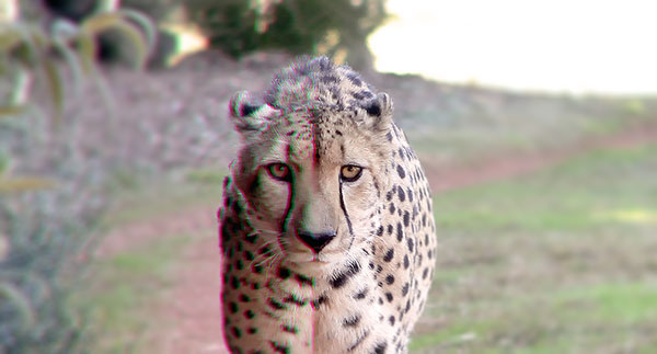 OziRig Cheetah Chromatic Aberration