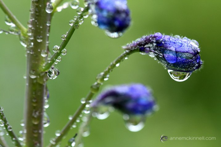 Rain drops on flowers by Anne McKinnell