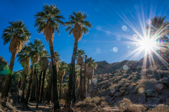 Palm Canyon Sunburst by Anne McKinnell