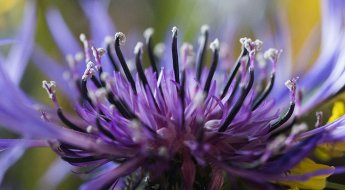 best digital camera for macro photography