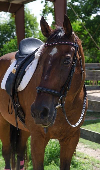 Bowman horse