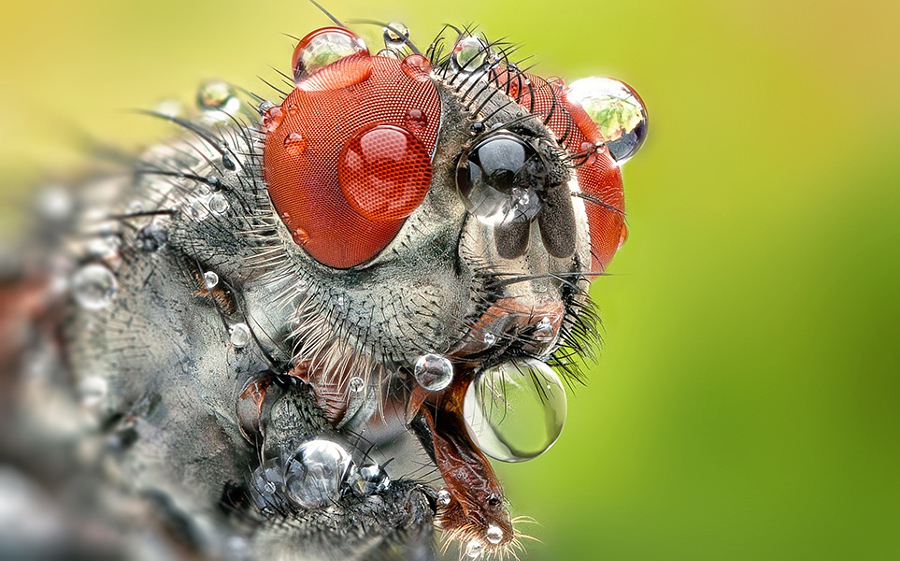 macro digital need 500px close everything tips lens macrophotography insect know fly photograph kocak lenses dps