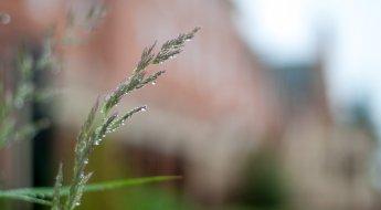 grass-building