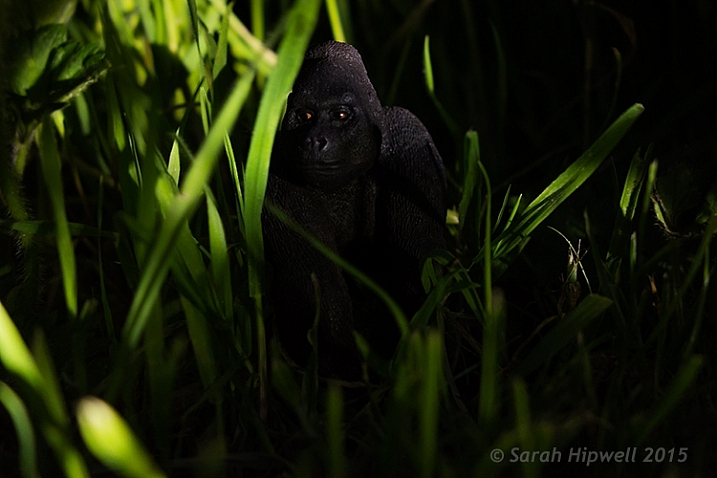 Gorilla-in-grass