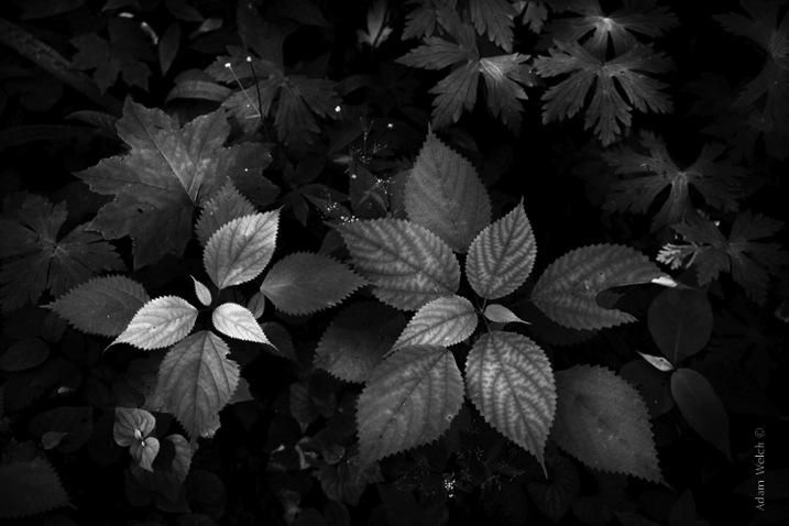 http://digital-photography-school.com/wp-content/uploads/2015/06/True-BW.jpg