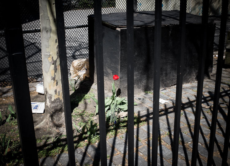 Red Flower, East Village, NYC.