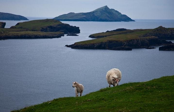 Seascape example - Valencia Island with Sheep
