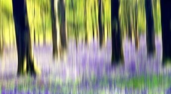 bluebellwoodsblur750.jpg