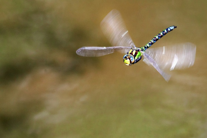 DragonflyingDPS