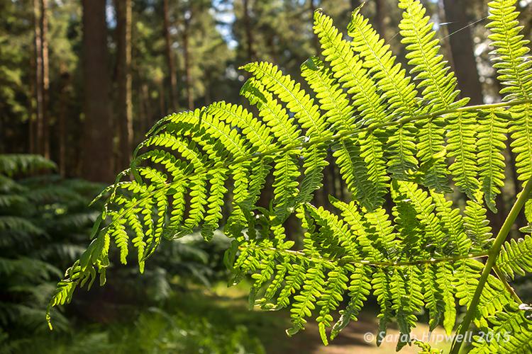 Close-up-ferns