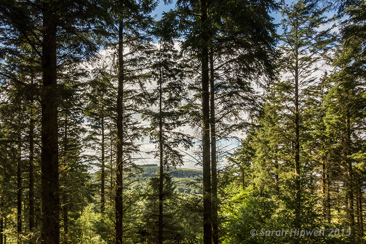 Trees-in-forest