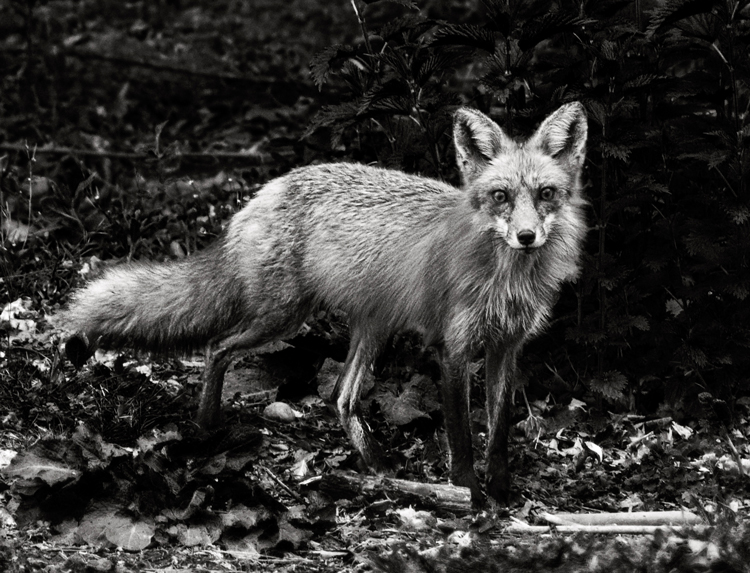 Tips for Black and White Wildlife Photography
