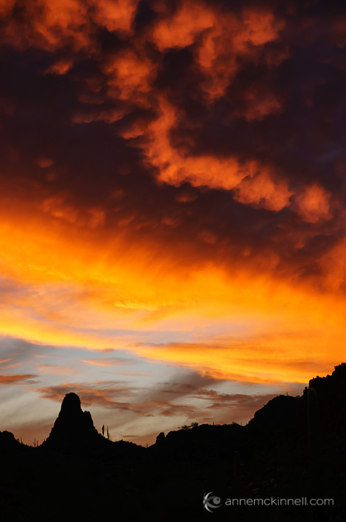 Ajo Sunset by Anne McKinnell