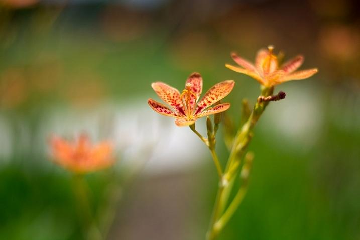 3-tips-flower-photos-bokeh-dark-orange