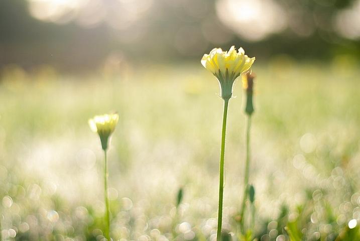 3-tips-flower-photos-morning-sun