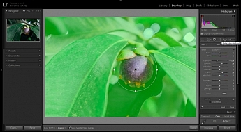 Lightroom's radial filter