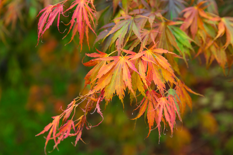 Autumn Portraits 4