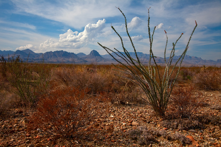 http://digital-photography-school.com/wp-content/uploads/2015/10/BigBend.jpg