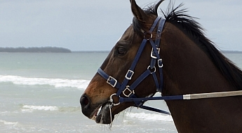 Equine-photography-10