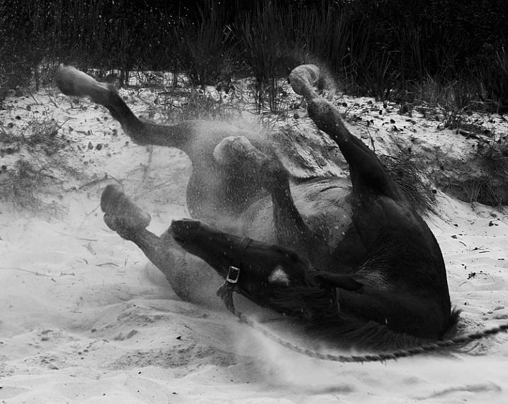 Equine-photography-5