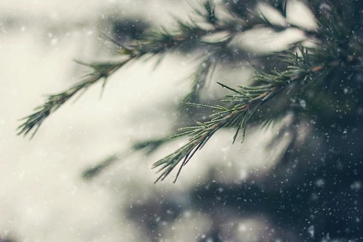 winter-wonderland-action-8