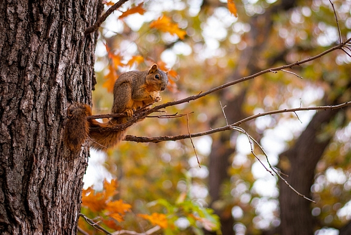 focus-and-recompose-squirrel