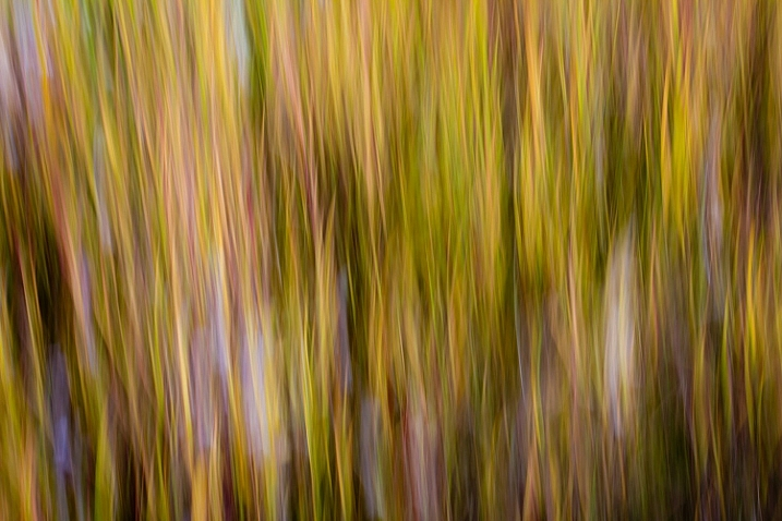An abstract blur of cotton grass, Fairbanks, Alaska, in autumn.