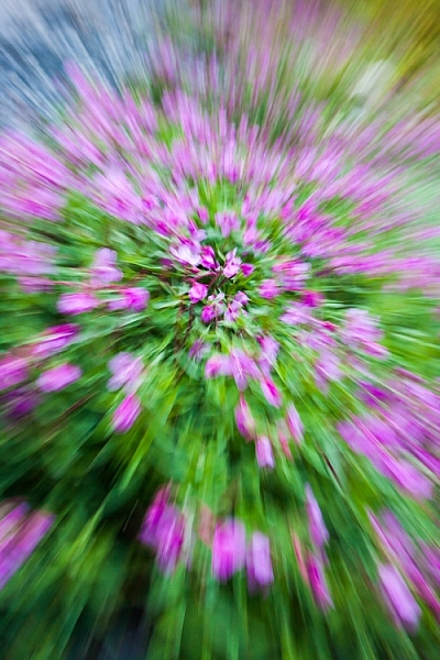 AK-Girdwood-fireweed-abstract-3
