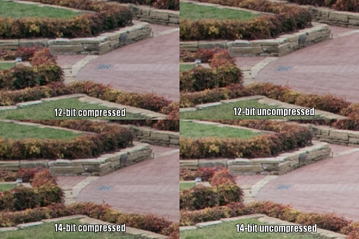 raw-formats-compared-garden-underexpoure-fixed-compared-crop