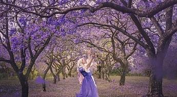 Dance-of-the-Jacarandas.jpg