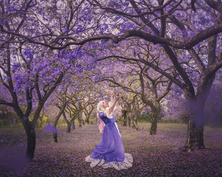 Dance of the Jacarandas