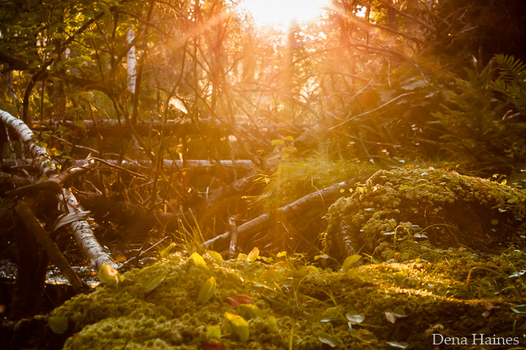 How To Photograph Sun Flares 14 Tips For Beginners