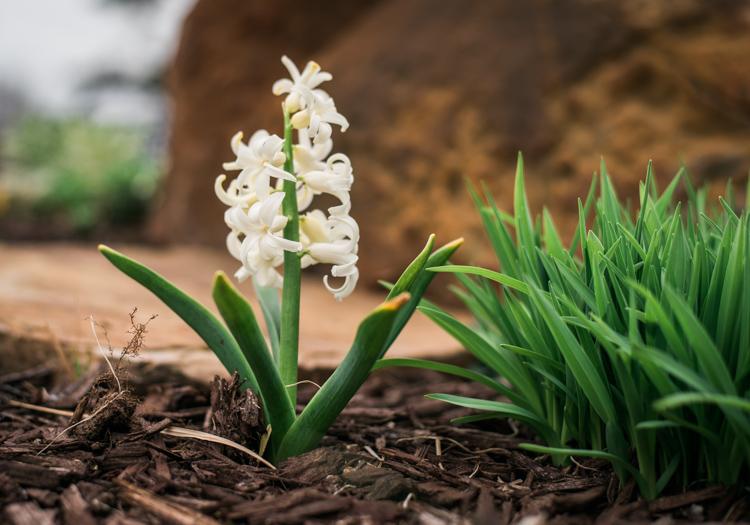 five-tips-brush-tool-white-flower