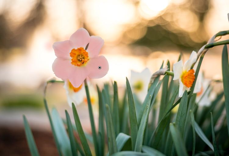 five-tips-brush-tool-white-yellow-flower-edits
