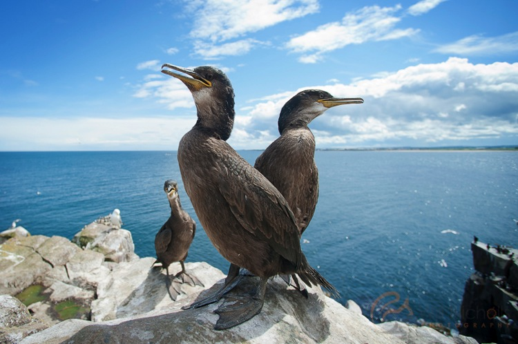 http://digital-photography-school.com/wp-content/uploads/2016/04/Juvenile-Shags.jpg