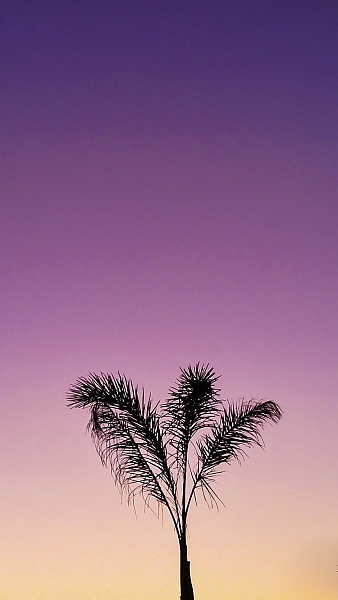 I loved the peacefulness of the light here and the silhouette of the palm tree.