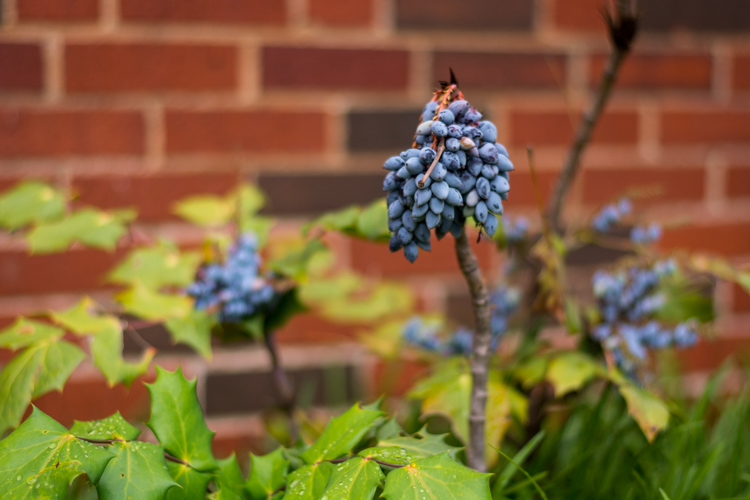 beginners-guide-lightroom-blue-buds