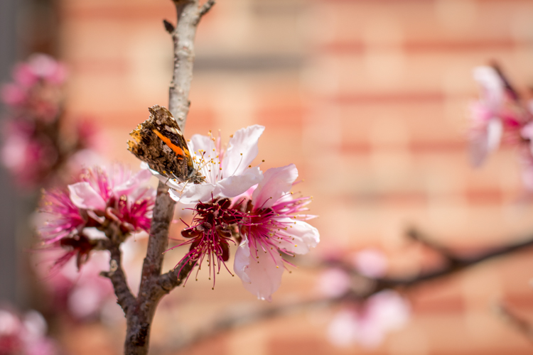 five-questions-before-photos-butterfly-flower