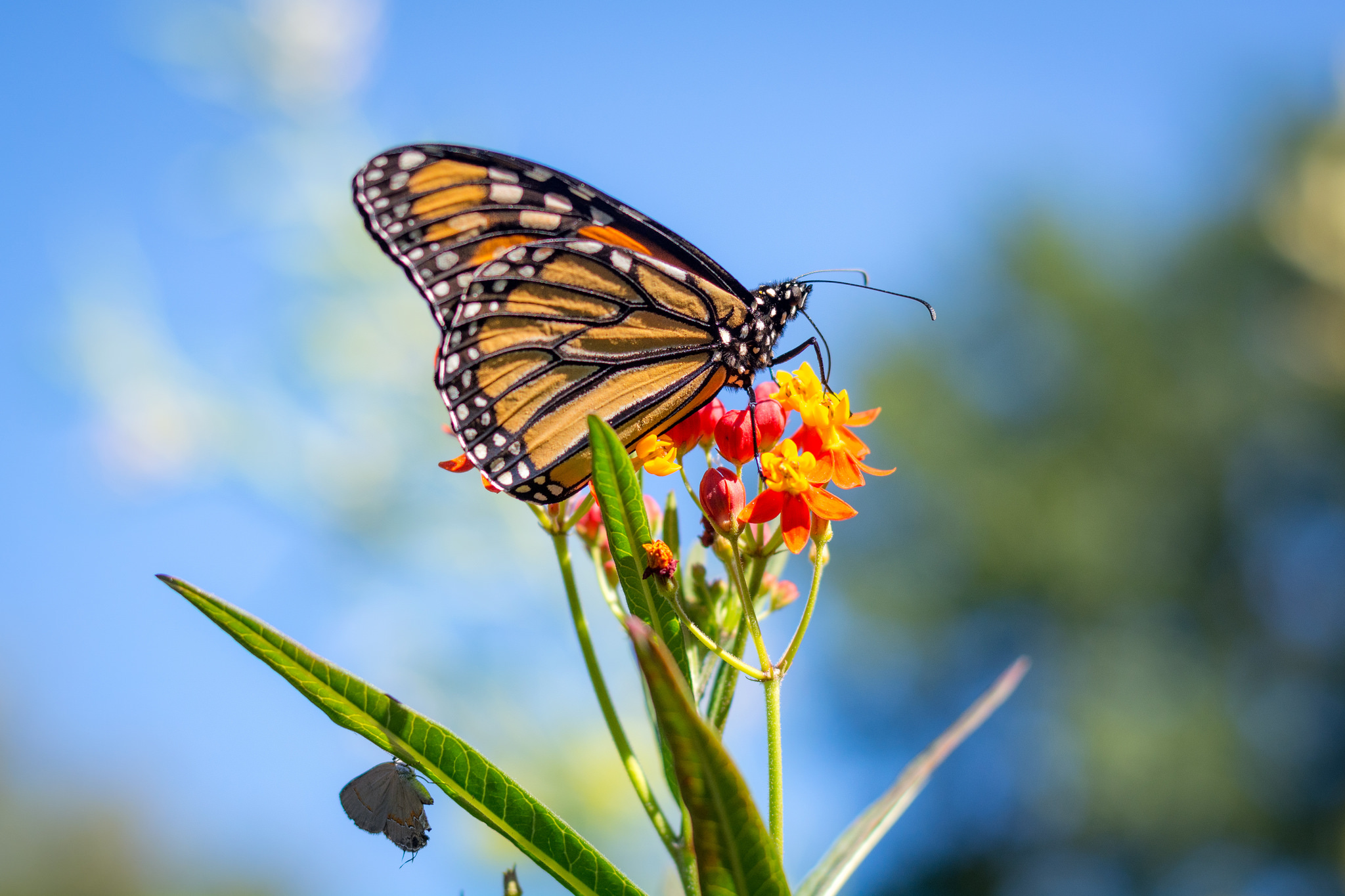 five-questions-before-photos-butterfly
