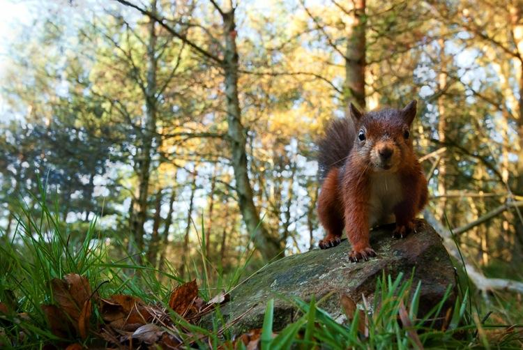Remotesquirrel2