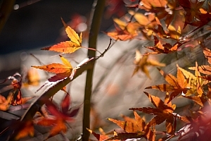understanding-bokeh-leaves