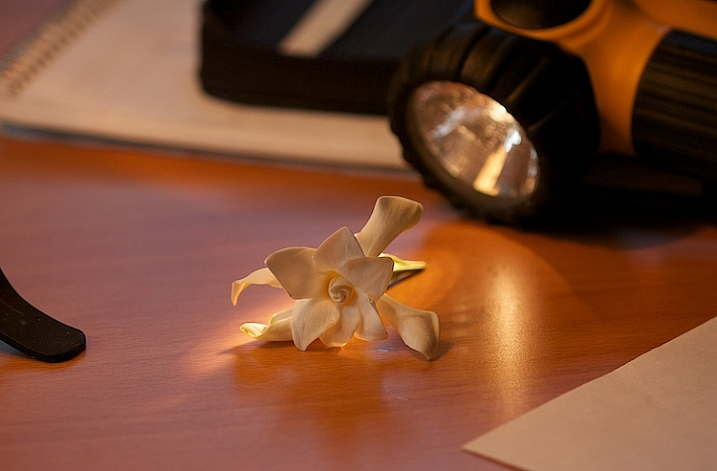 2-Light-painting-flowers-gardenia-1