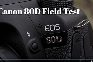 Canon 80D Field Test