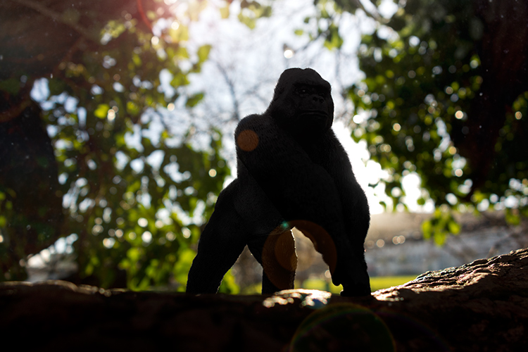 http://digital-photography-school.com/wp-content/uploads/2016/05/Gorilla-with-lens-flare-and-dust-particles.jpg