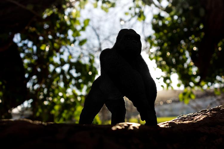 small-toy-plastic-gorilla
