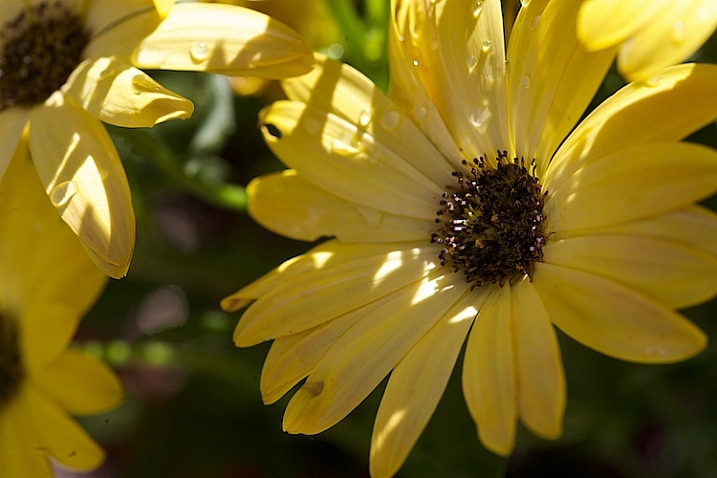 Photograph-Flowers-2016-05-11at15-34-44
