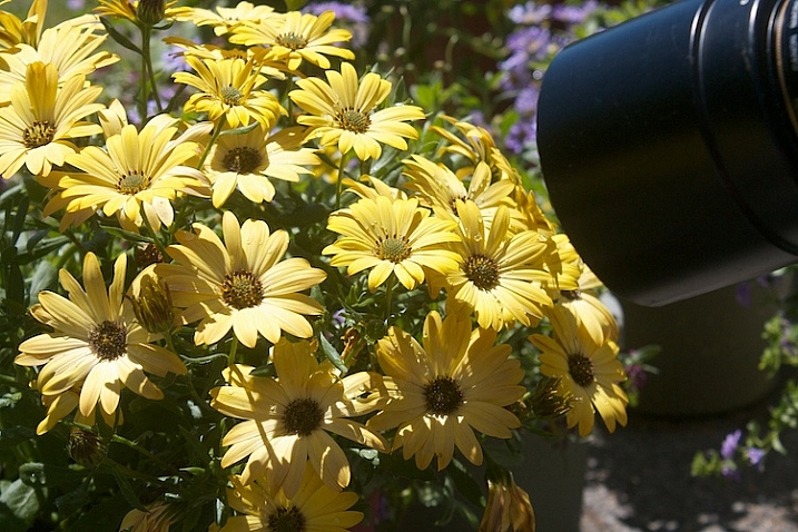 Photograph-Flowers-in-sun-2